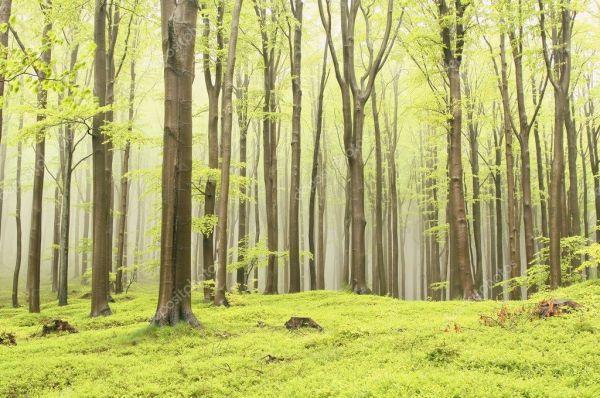 Туманный Весенний лес — Стоковое фото © nature78 #3210864