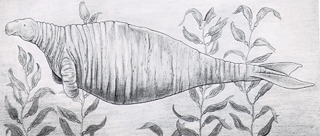 Stellar's Sea Cow (Extinct since 1768)