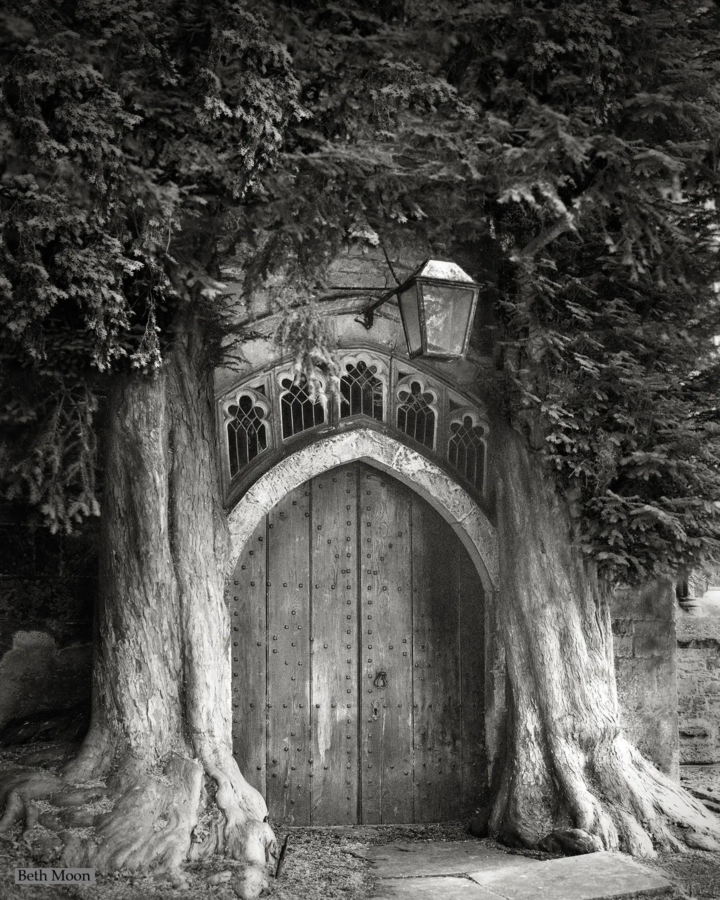 These two Yew Trees, which flank the door to the Church of St. Edward in Stow-on-the-Wold, England, planted sometime in the 18th century, were probably survivors of an avenue of trees that led to the door of the church. They now appear to grow from the building itself.