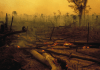 The Amazon Rainforest is burning. Heres why there are so many fires and what it all means for the planet.