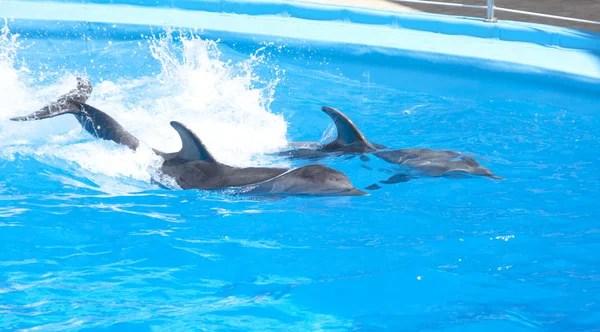 ᐈ Дельфина: фото и картинки море дельфины, скачать рисунок ...