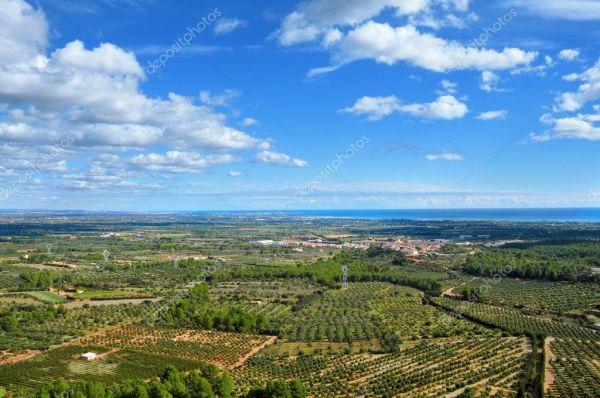 Оливковые рощи в Коста-Дорада, Испания — Стоковое фото ...