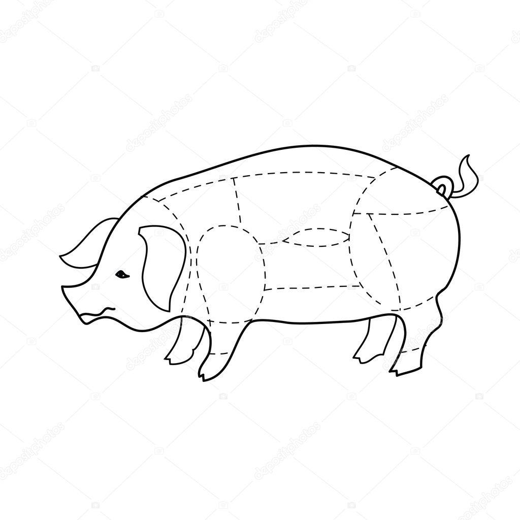 Schema Schweinefleisch Kadaver