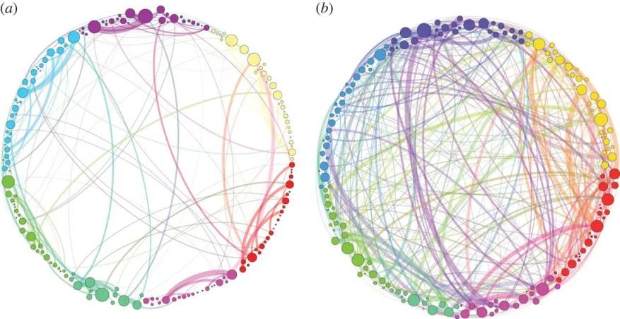 shrooms רשתות המוח