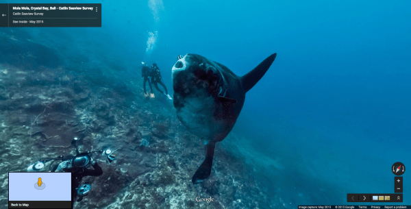 14 animal photos from Google Street View - Business Insider