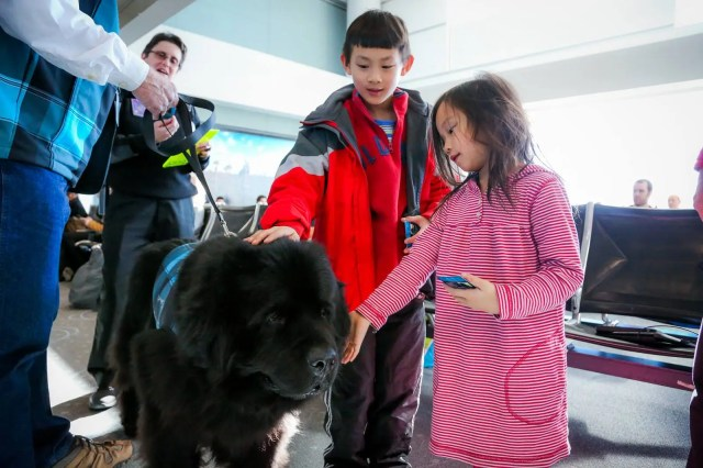 therapy dogs airport