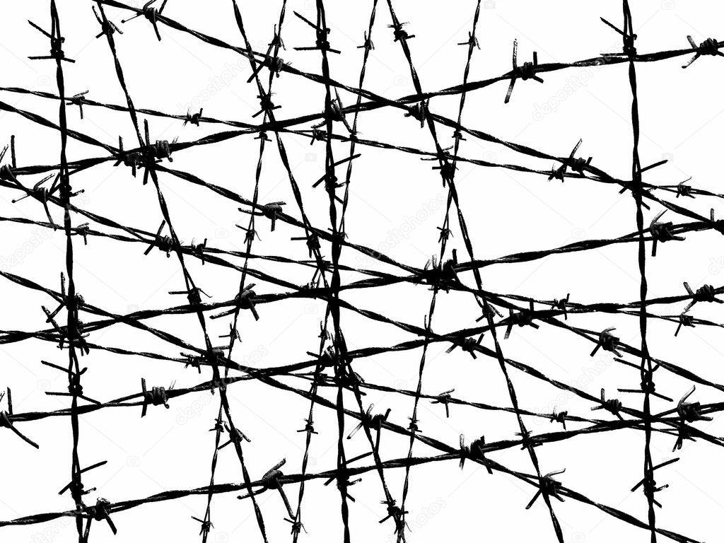 Msd White Wire