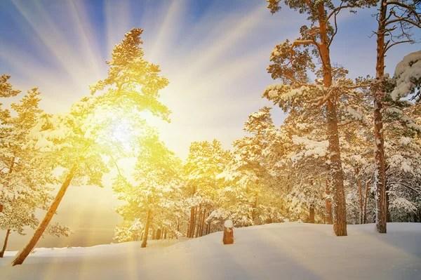 Зимовий ліс і яскравий захід сонця — Стокове фото © Dr.PAS ...
