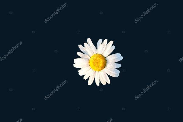 Ромашки на лугу — Стоковое фото © Hackman #6826824