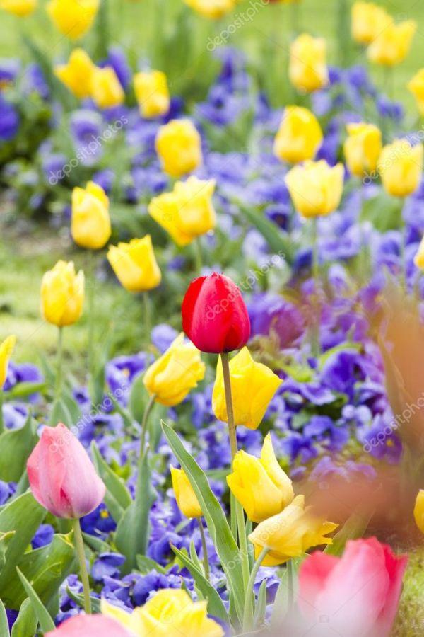Весна красочный фон тюльпан — Стоковое фото © outsiderzone ...