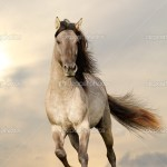 ᐈ Wild Horses Running On Beach Stock Pictures Royalty Free Wild Horses Running Images Download On Depositphotos
