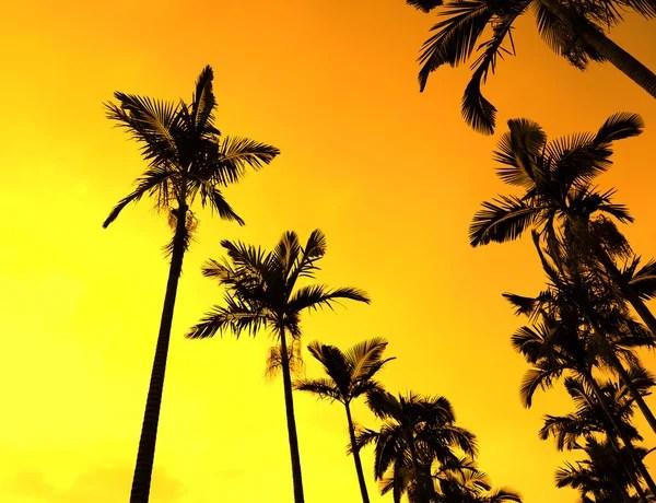 Пальмова дерево силует на рай захід сонця на пляжі ...