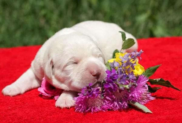 ᐈ Собаки с цветами: фото и картинки собака с цветами ...
