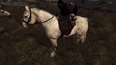 realistic horse breeds # 10