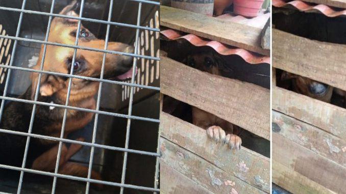 Rescataron a una perrita en el barrio La Cruz