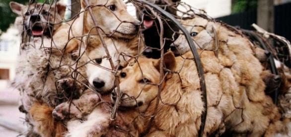 Risultati immagini per uccisioni barbare di animali