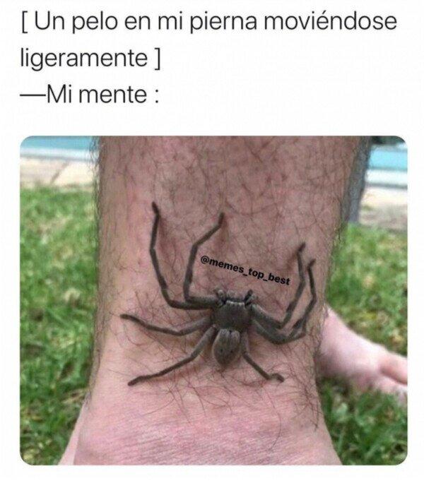 ¿Qué clase de bestia tengo en la pierna?