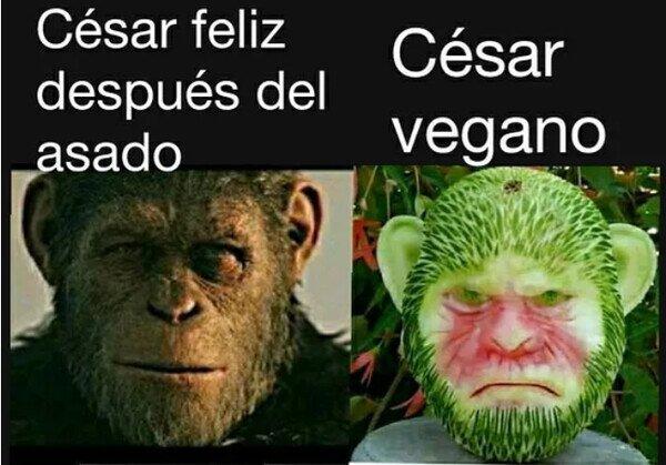 Nunca he visto a ningún vegano feliz