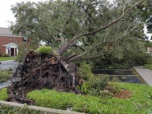 Hurrincane Irma takes it down