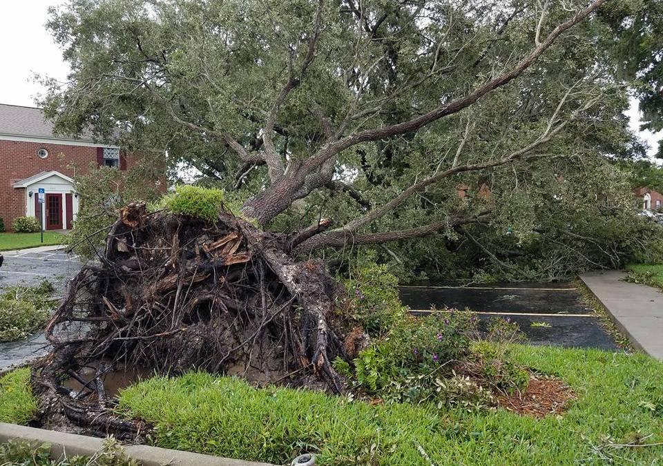 Hurricane Irma Recovery Resources