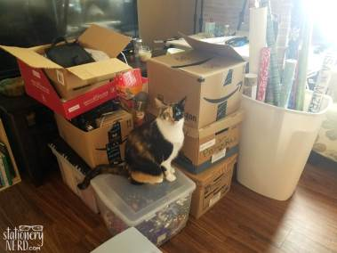 Pile of boxes with cat
