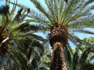 photograph of palm trees