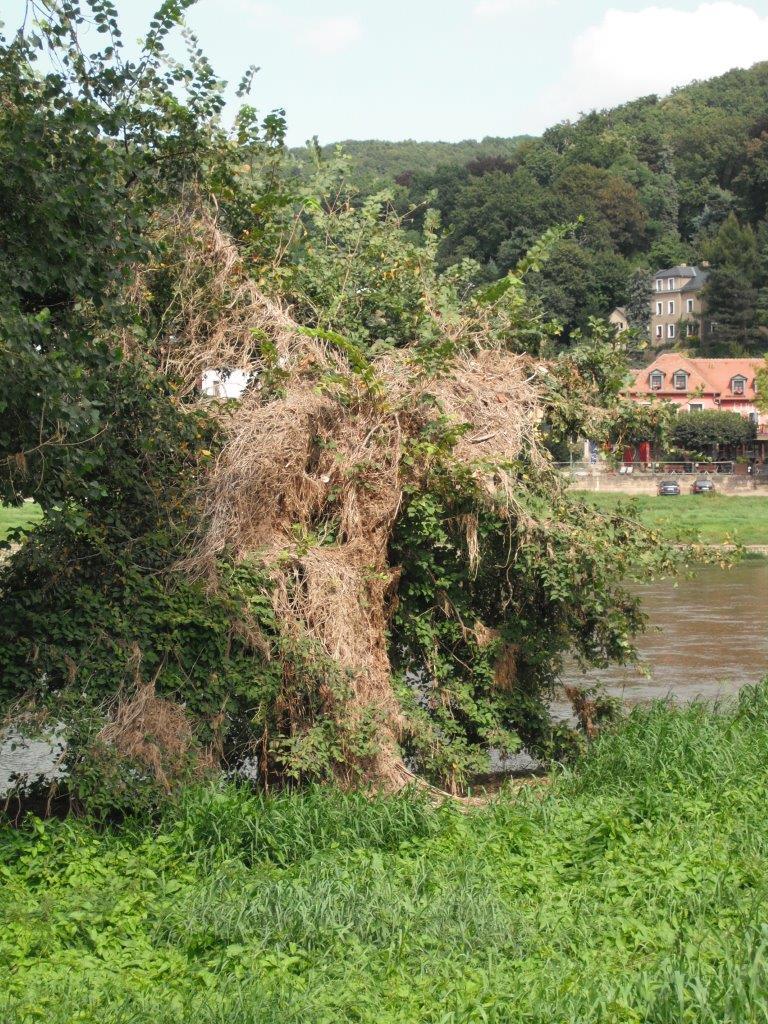 Hochwasser 2002: Schadensbilanz des sächsischen Umweltministeriums