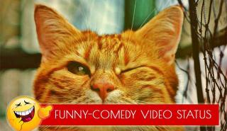 funny status video