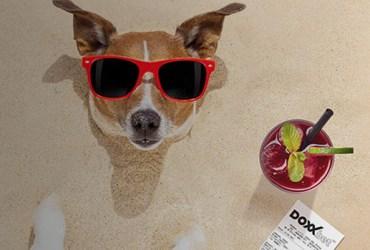 pes pláž tiket DOXXbet
