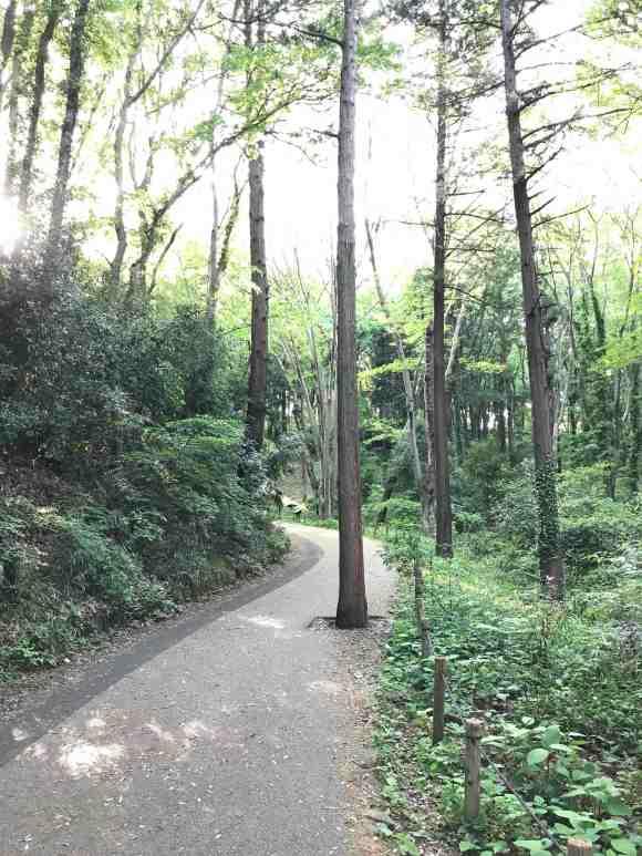県立座間谷戸山公園の風景2