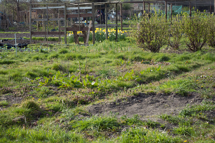 Overgrown allotment plot