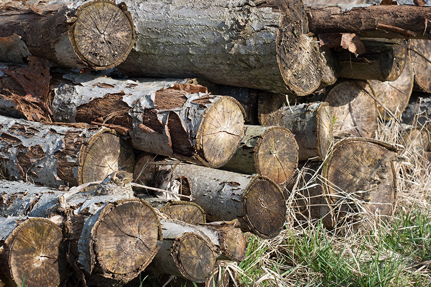 Pile of logs in the sun