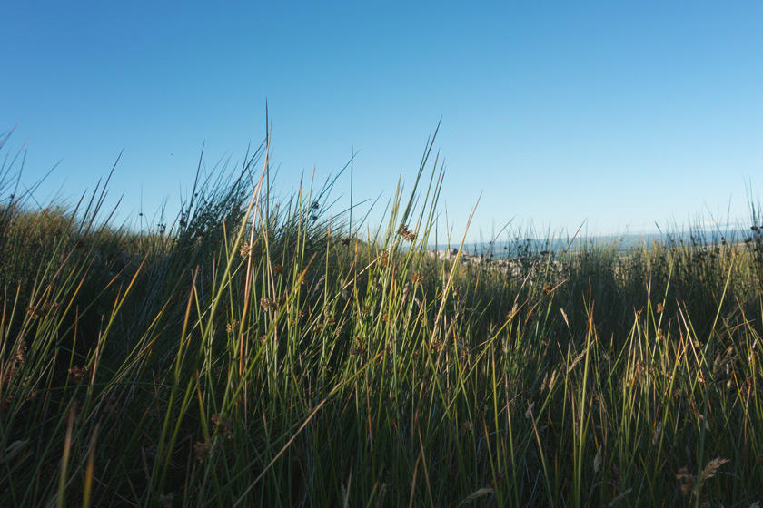 Rushes in the sunlight