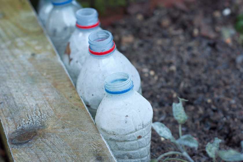 Water bottle cloches with frost