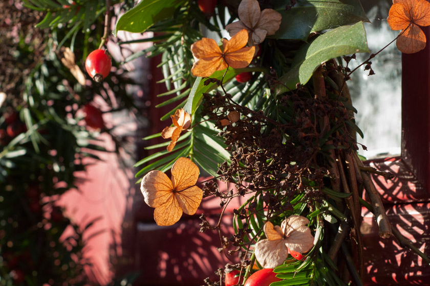 Dried hydrangeas on Christmas wreath