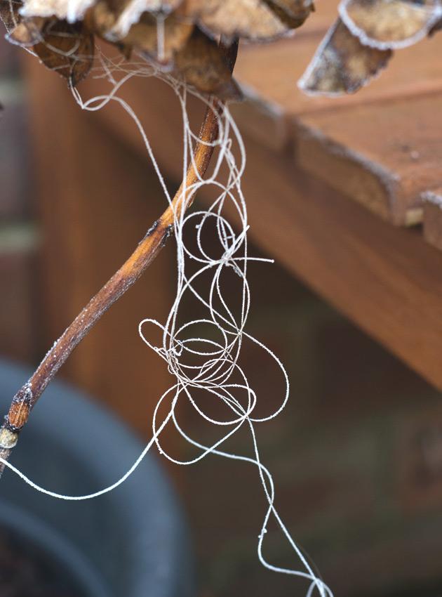 Curled, tangled cobweb