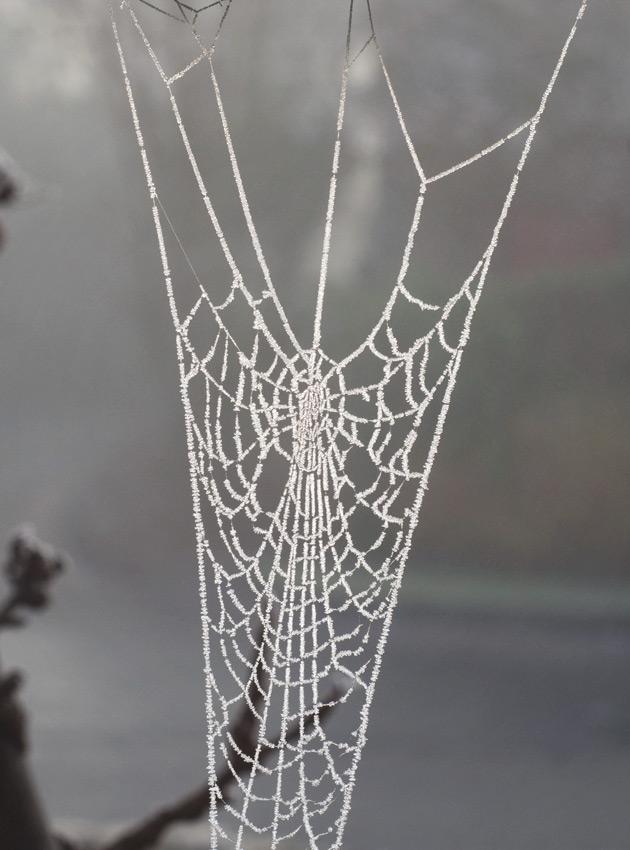 Cobweb covered in ice