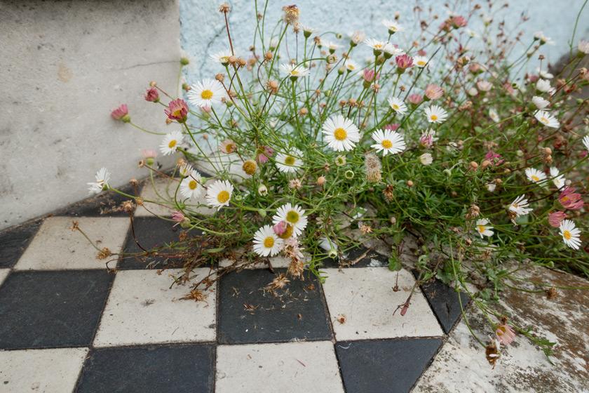 Flowers growing on steps