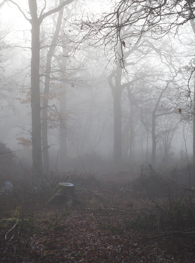 Thick fog in forest