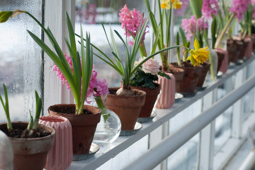 Flowers in vases at window