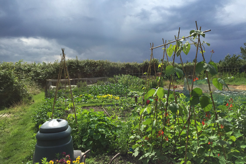 Dark clouds over allotment