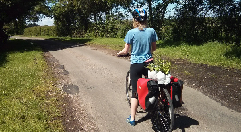 Plants and pannier bags on bike