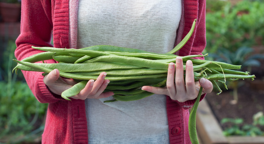 Stack of long runner beans
