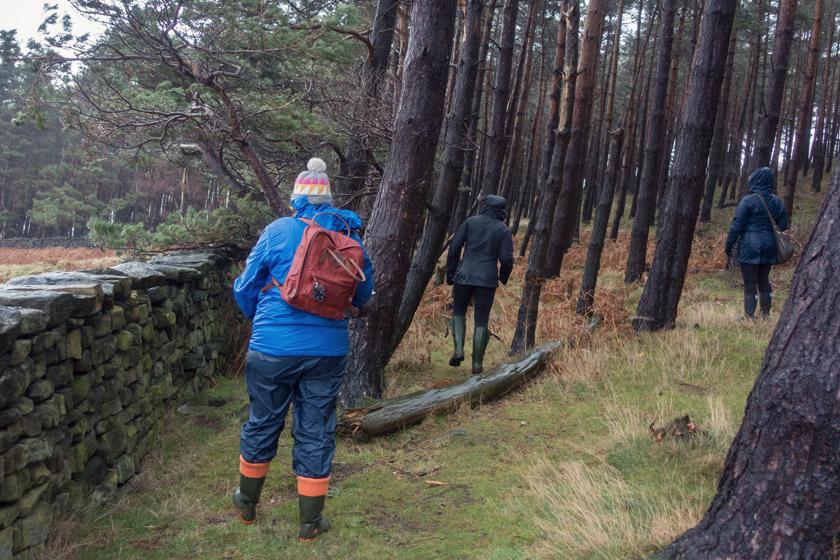 Walking amongst trees