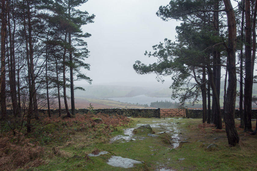 View of moorland through trees