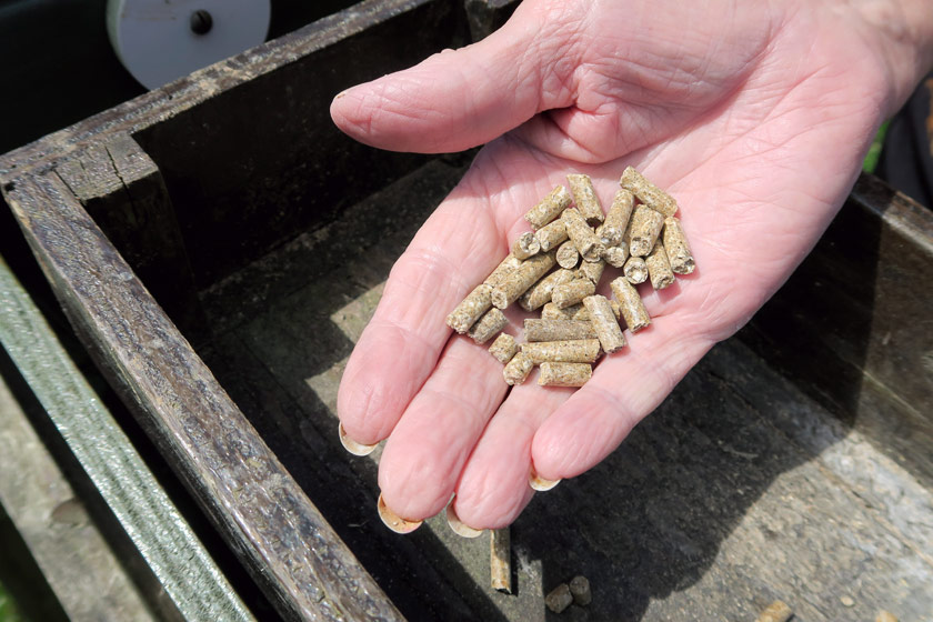 Pig feed pellets in hand