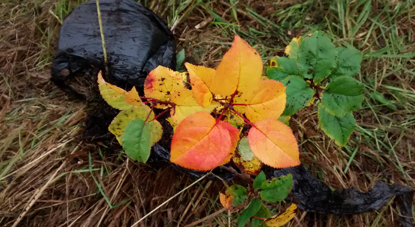 Orange and red tree leaves