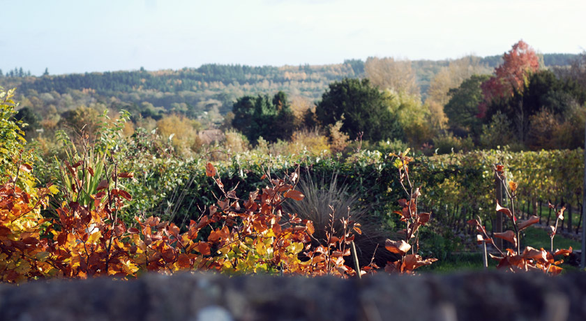 Country view over garden wall