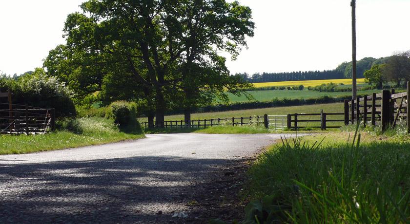 Country lane in Medstead