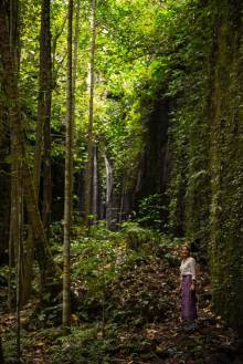 Forest in Bali, travel to Indonesia